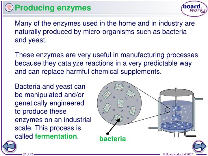 Producing enzymes