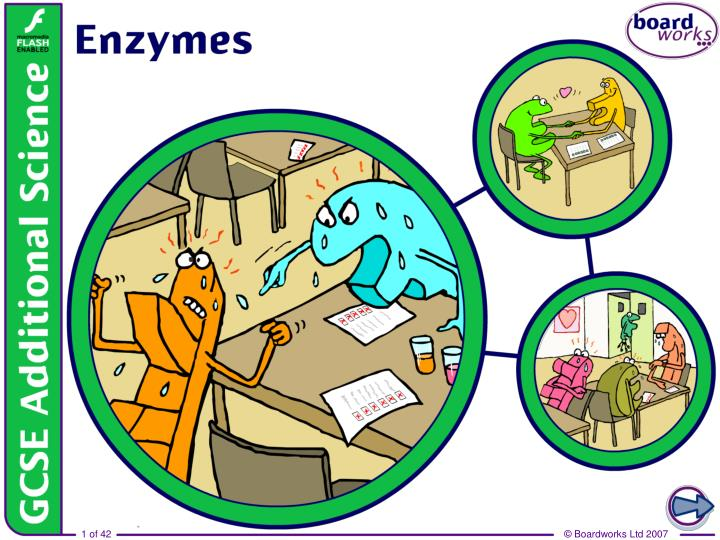 7 enzymes
