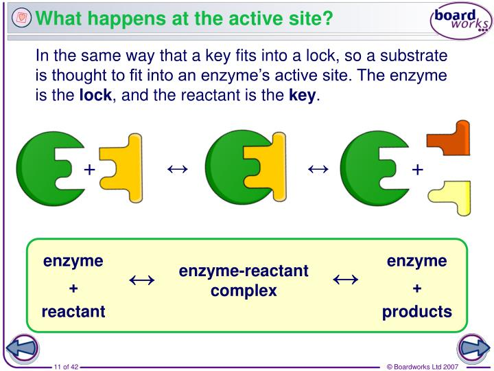 What happens at the active site?