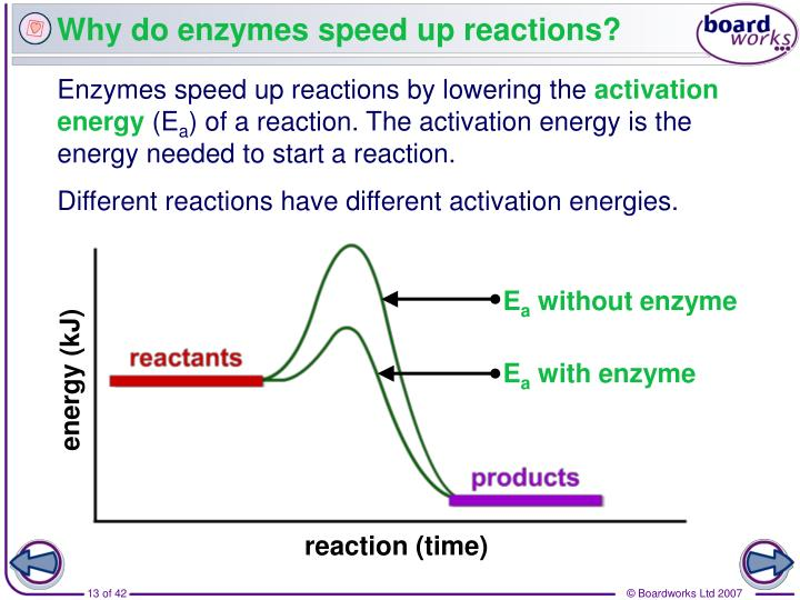 Why do enzymes speed up reactions?