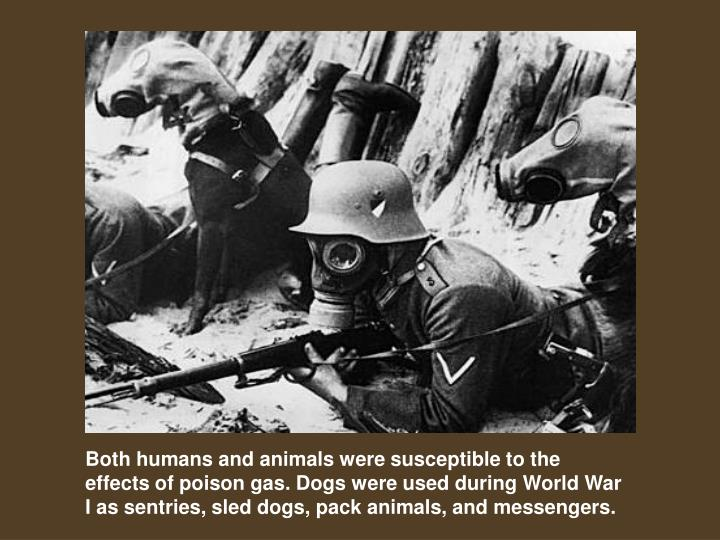 Both humans and animals were susceptible to the effects of poison gas. Dogs were used during World War I as sentries, sled dogs, pack animals, and messengers.