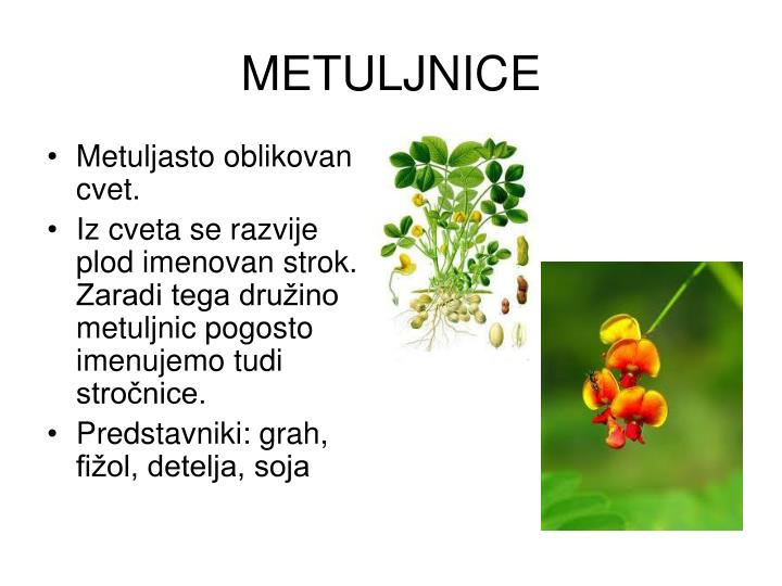 METULJNICE
