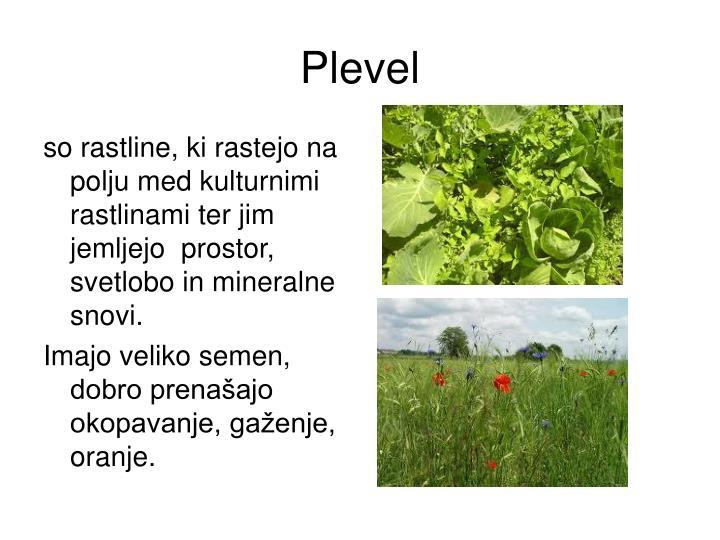 Plevel