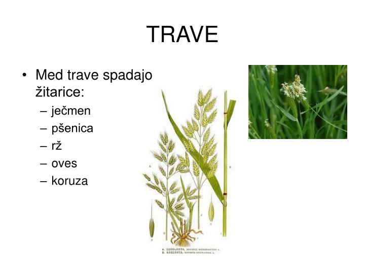 TRAVE
