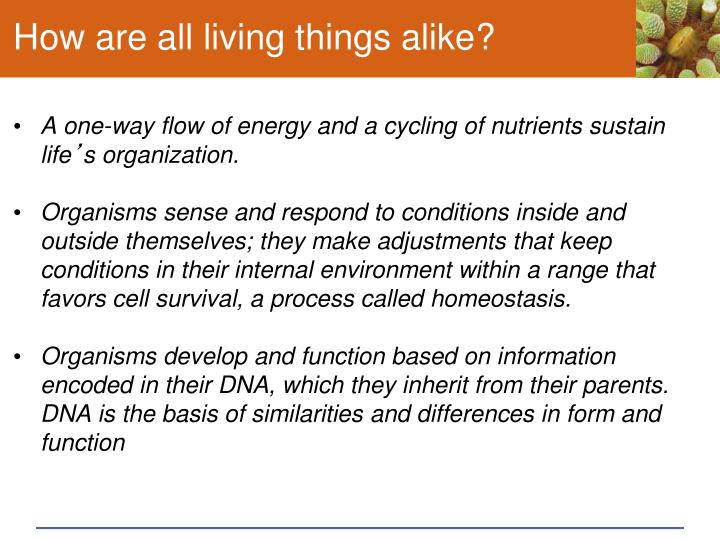 How are all living things alike?
