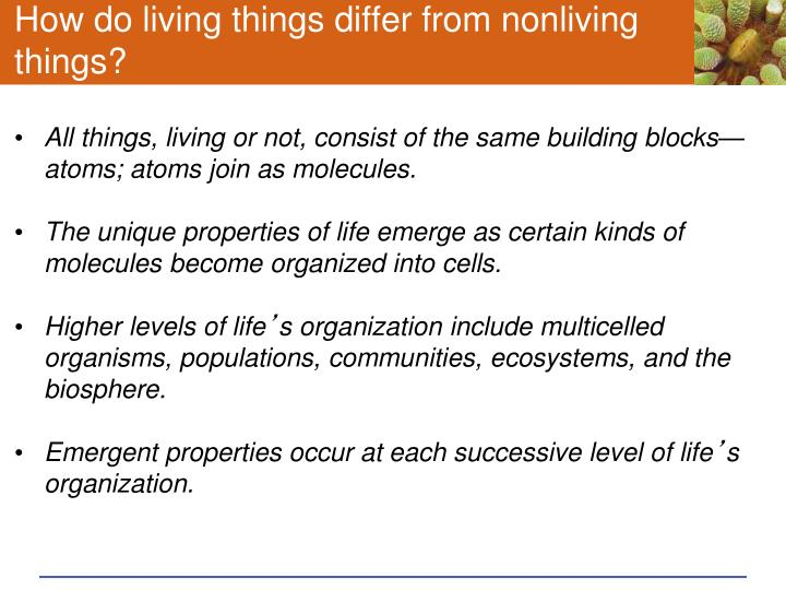 How do living things differ from nonliving things?