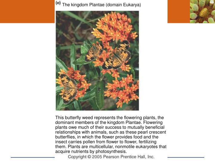 The kingdom Plantae (domain Eukarya)
