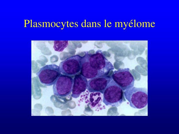 Plasmocytes dans le myélome