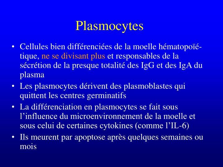 Plasmocytes