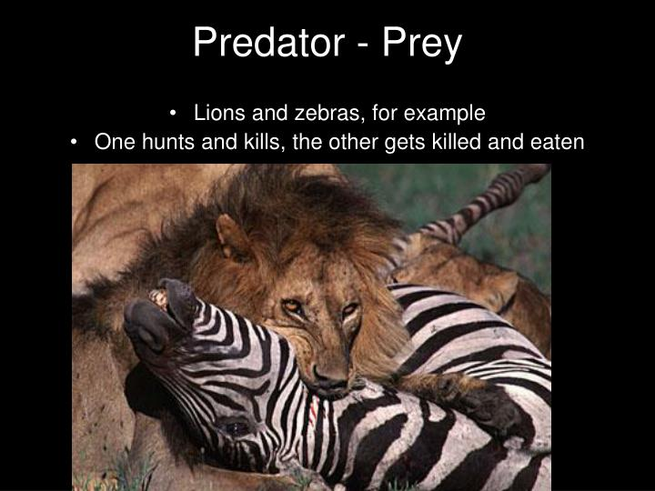 prey predator relationship was given by in an invitation