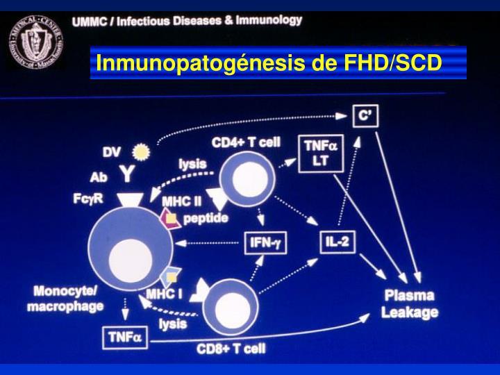Inmunopatogénesis de FHD/SCD