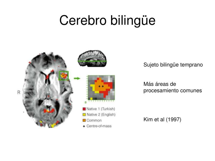 Cerebro bilingüe