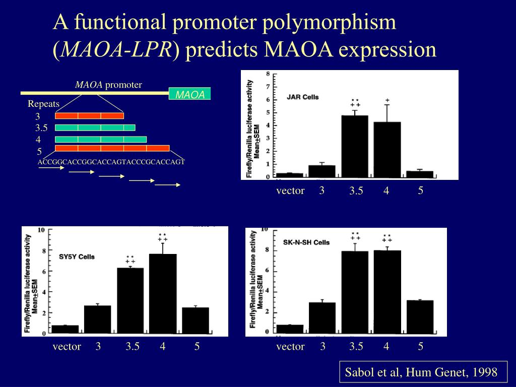 A functional promoter polymorphism (