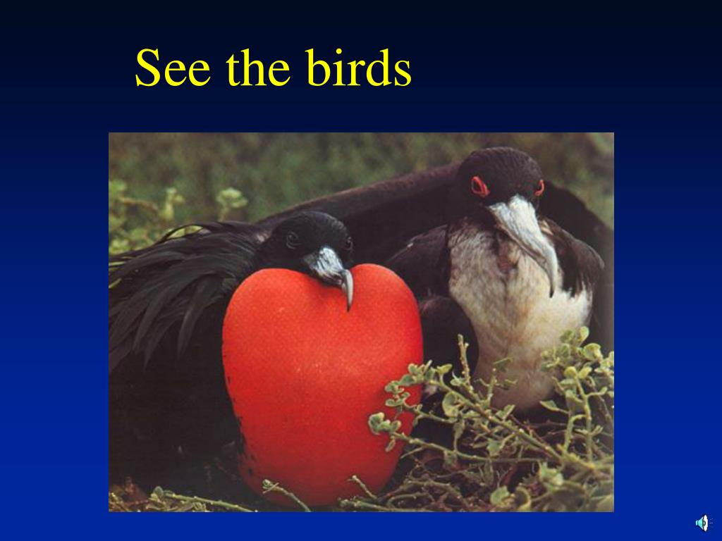See the birds