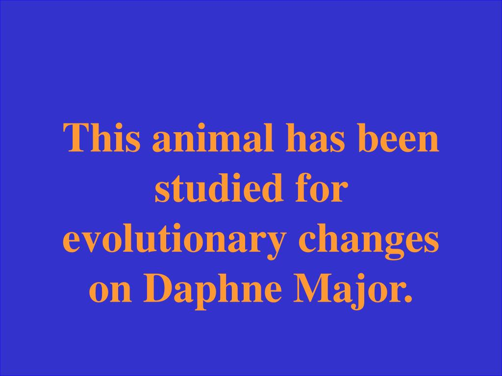 This animal has been studied for evolutionary changes on Daphne Major.