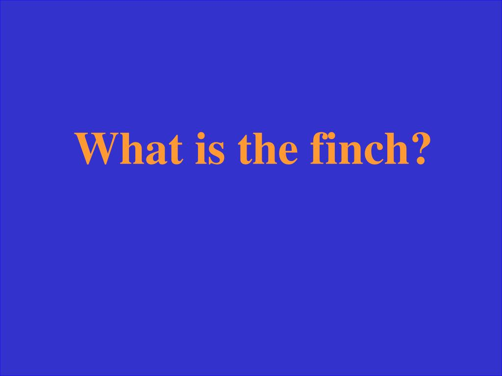 What is the finch?