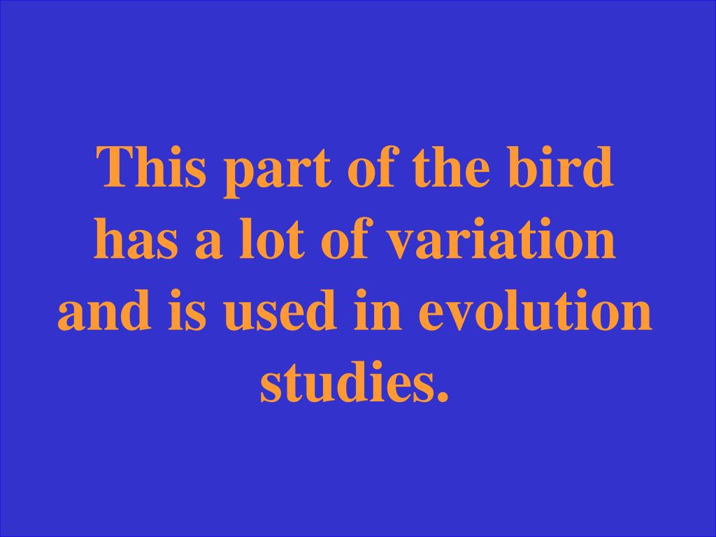 This part of the bird has a lot of variation and is used in evolution studies.
