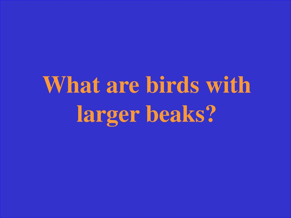 What are birds with larger beaks?