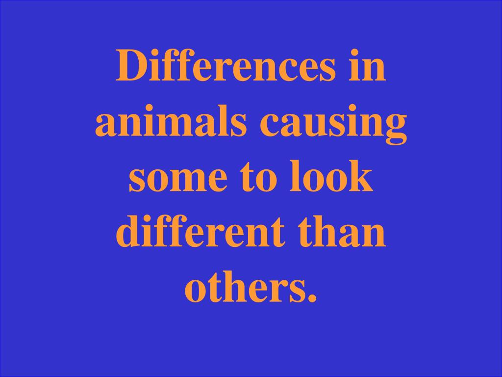 Differences in animals causing some to look different than others.