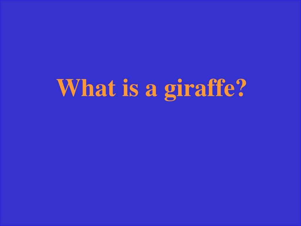 What is a giraffe?