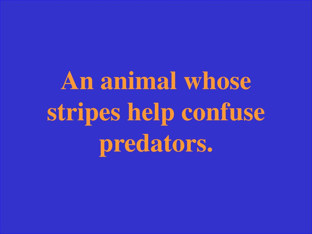 An animal whose stripes help confuse predators.