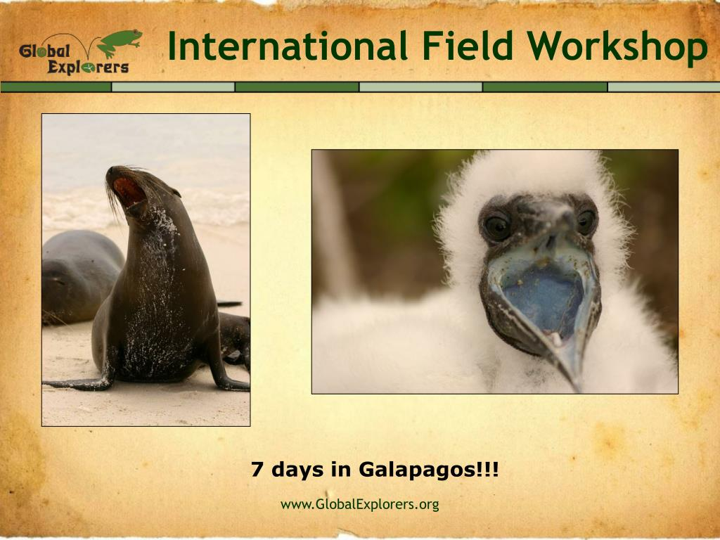 International Field Workshop