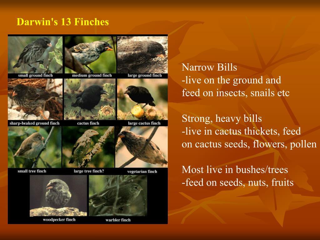 Darwin's 13 Finches