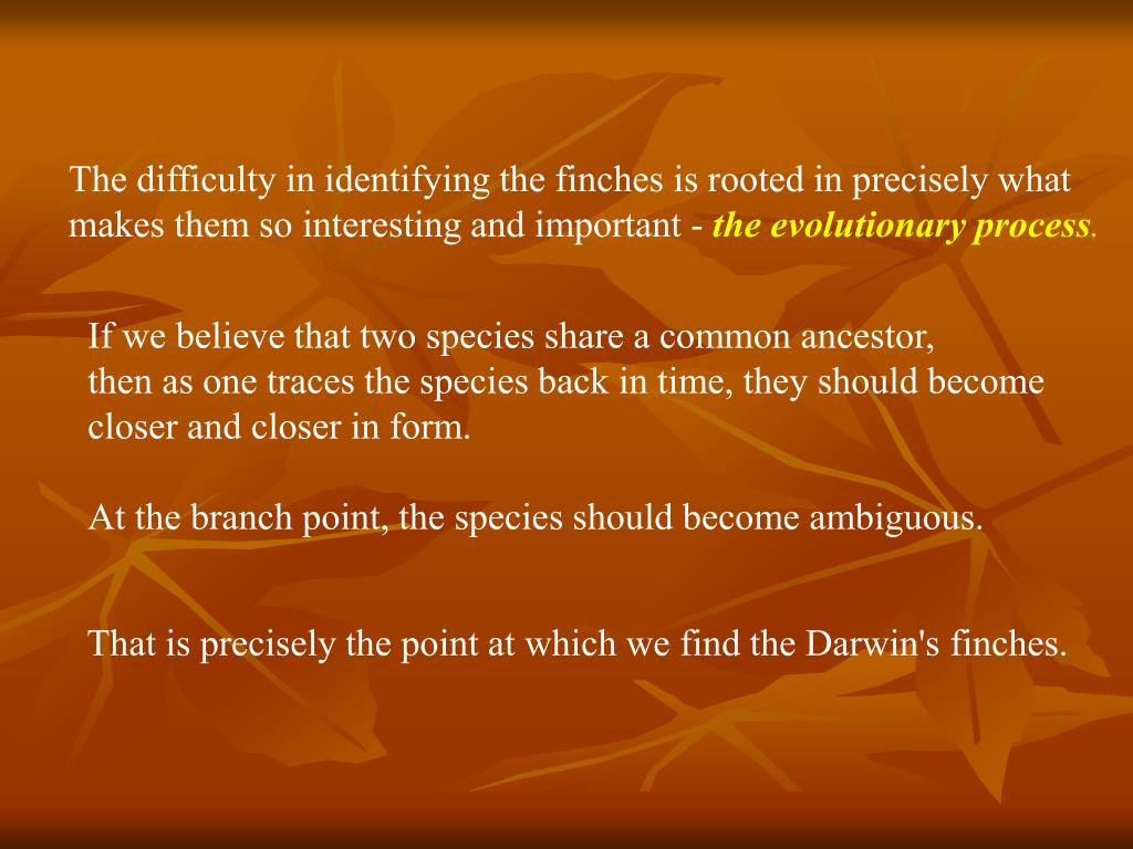 The difficulty in identifying the finches is rooted in precisely what