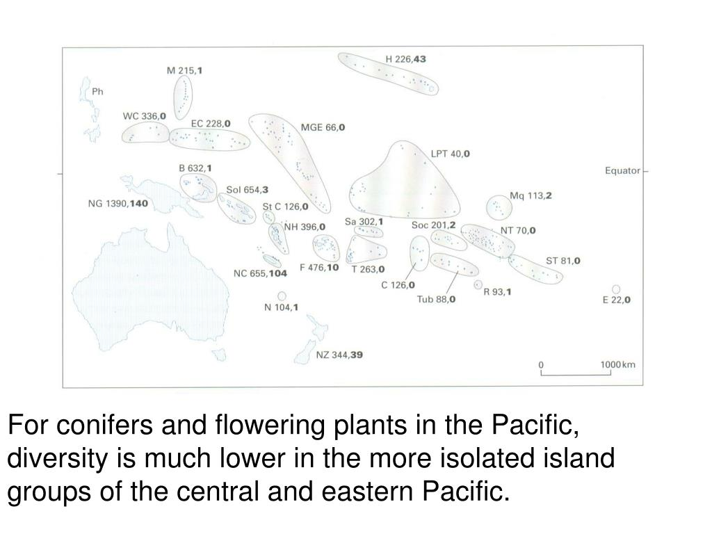 For conifers and flowering plants in the Pacific, diversity is much lower in the more isolated island groups of the central and eastern Pacific.