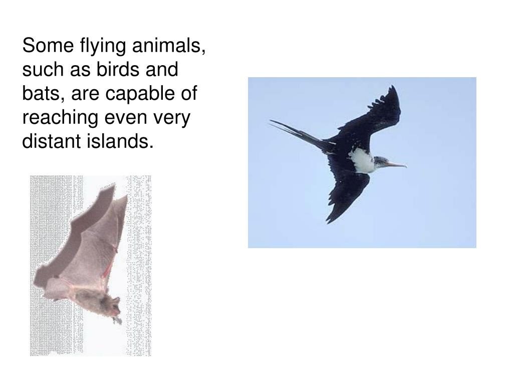 Some flying animals, such as birds and bats, are capable of reaching even very distant islands.