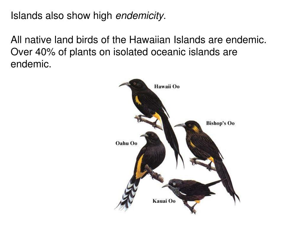 Islands also show high