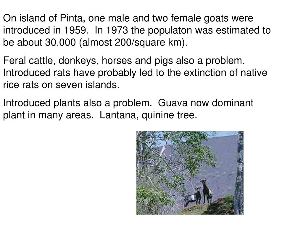 On island of Pinta, one male and two female goats were introduced in 1959.  In 1973 the populaton was estimated to be about 30,000 (almost 200/square km).