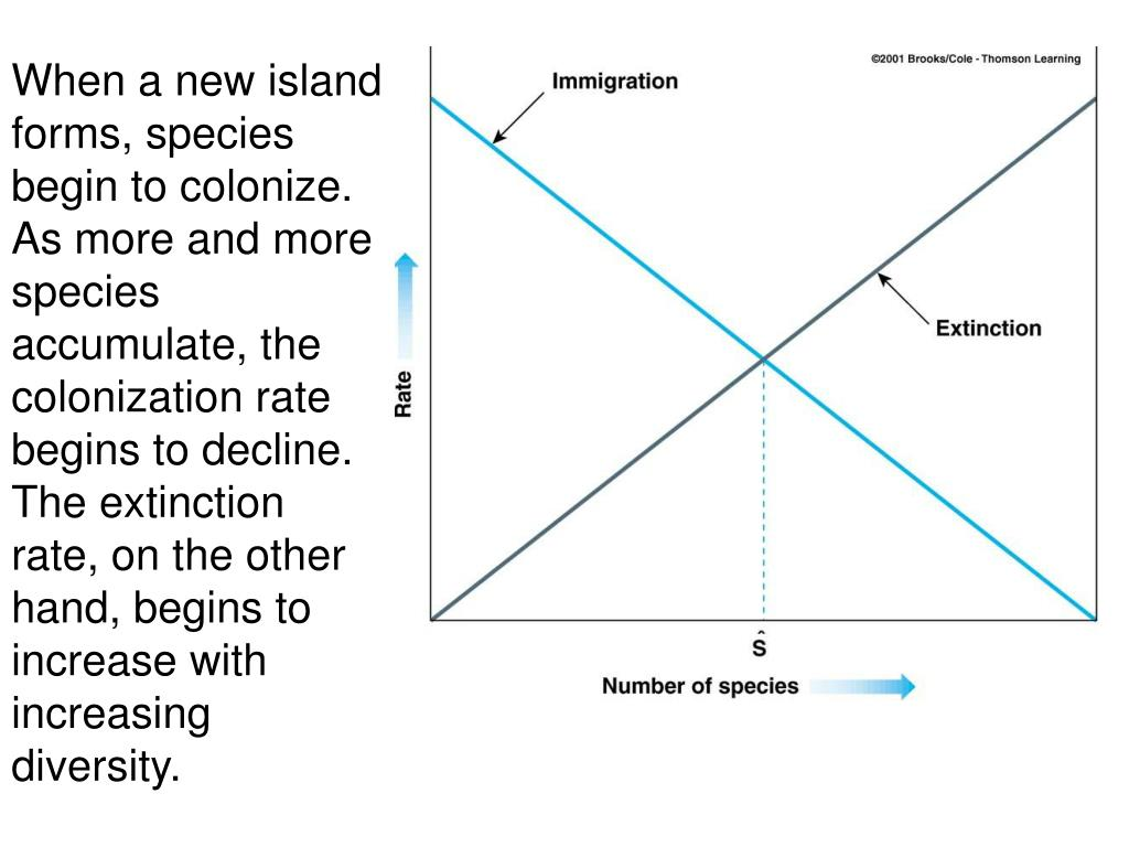 When a new island forms, species begin to colonize.  As more and more species accumulate, the colonization rate begins to decline.  The extinction rate, on the other hand, begins to increase with increasing diversity.