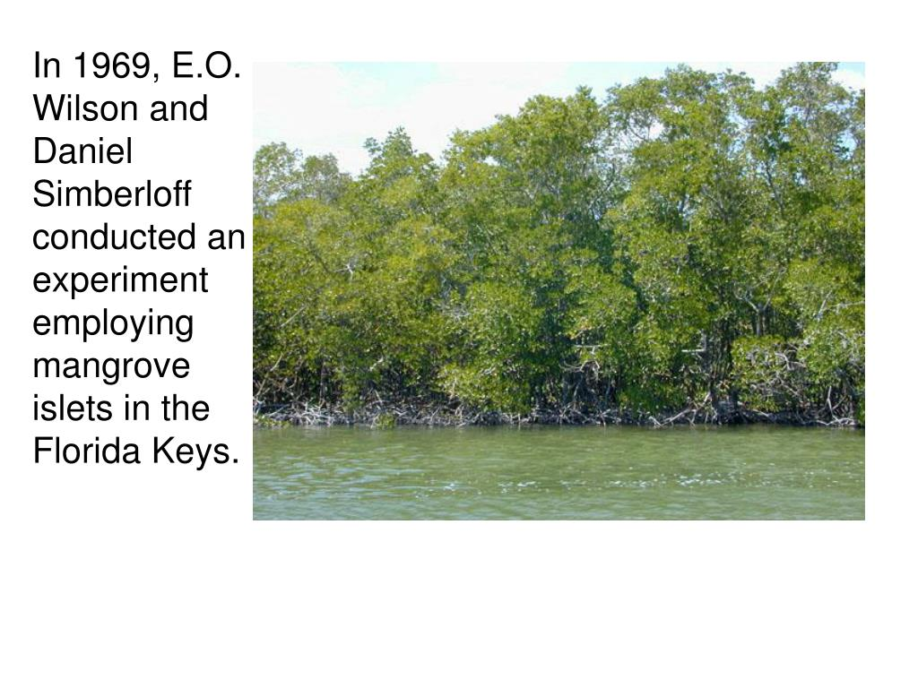In 1969, E.O. Wilson and Daniel Simberloff conducted an experiment employing mangrove islets in the Florida Keys.