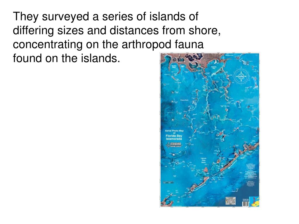 They surveyed a series of islands of differing sizes and distances from shore, concentrating on the arthropod fauna found on the islands.