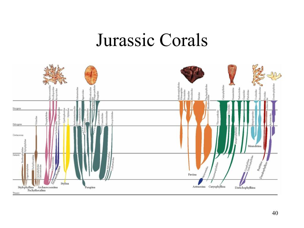 Jurassic Corals