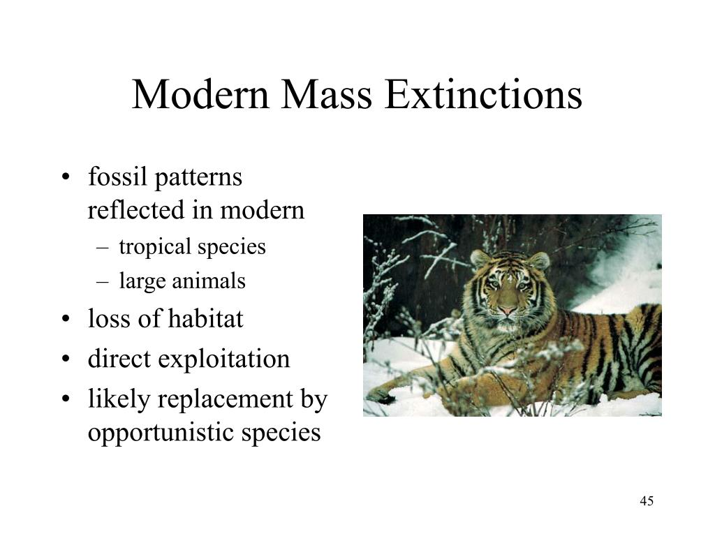 Modern Mass Extinctions