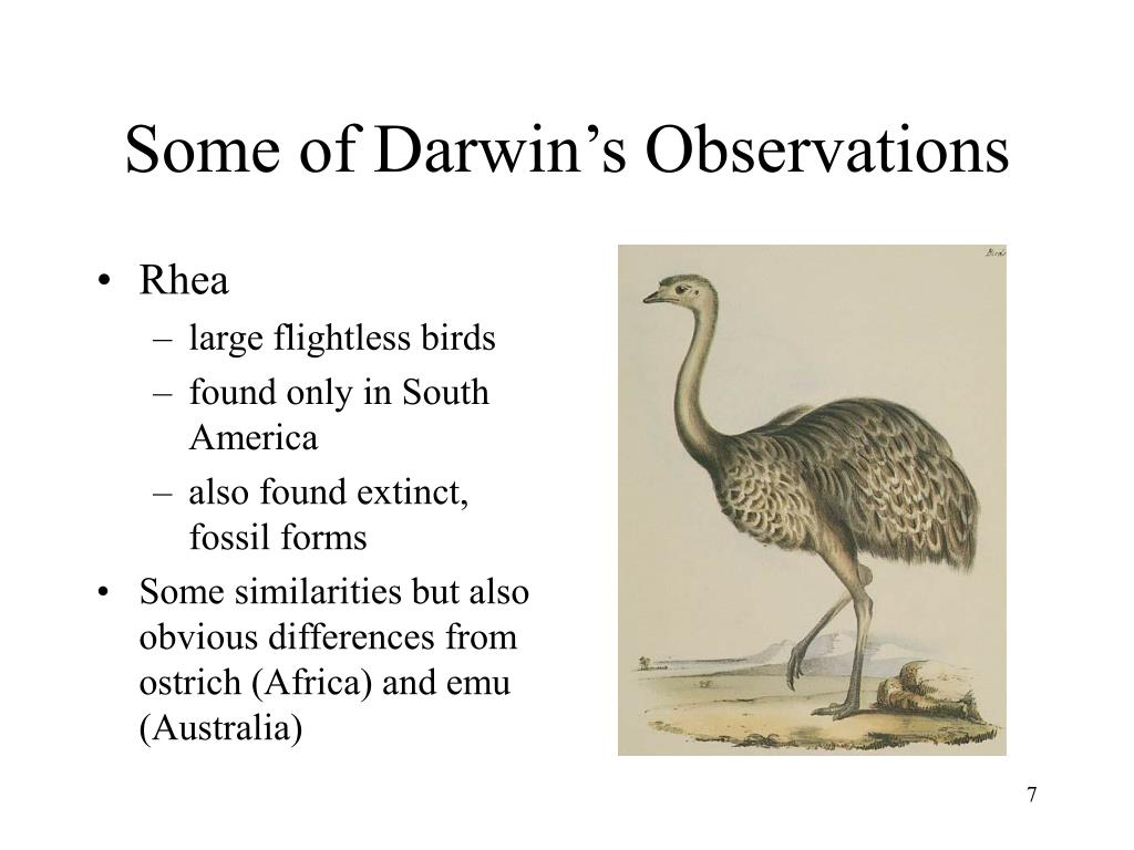 Some of Darwin's Observations