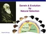 darwin evolution by natural selection