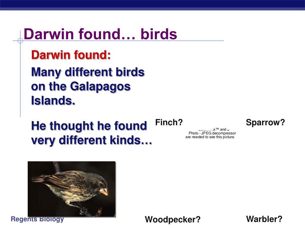 Finch?