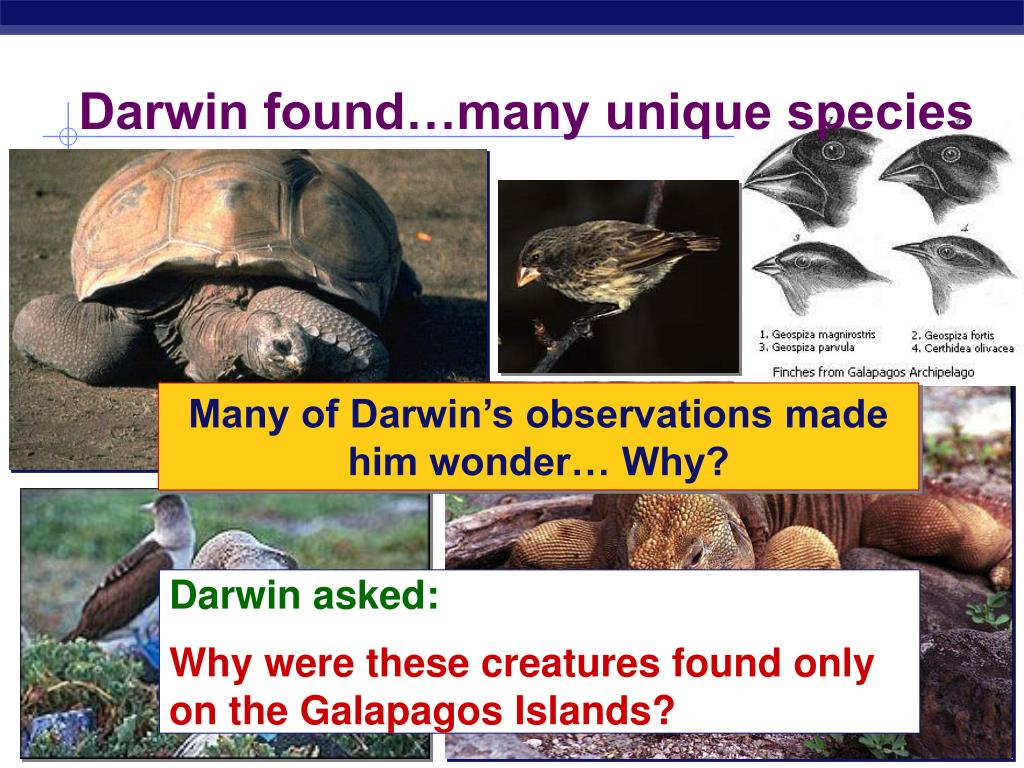 Darwin found…many unique species