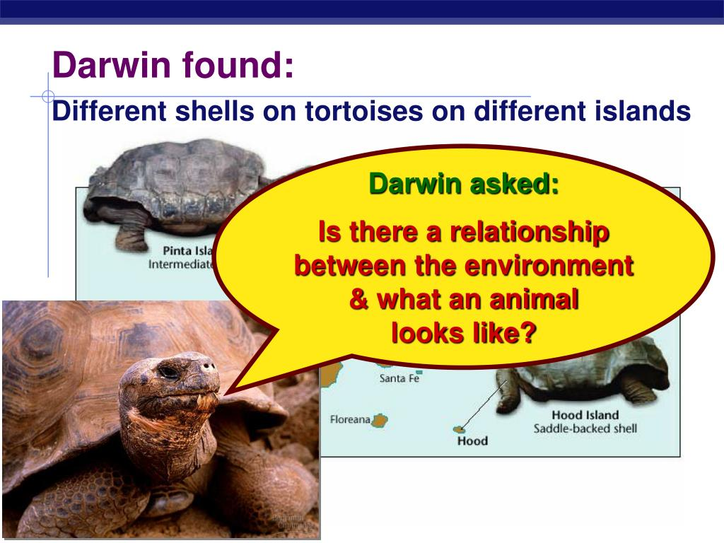 Darwin found: