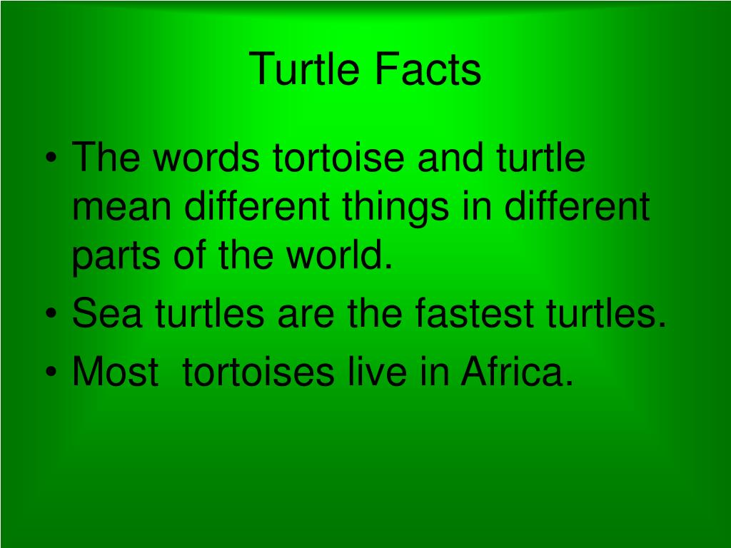 Turtle Facts