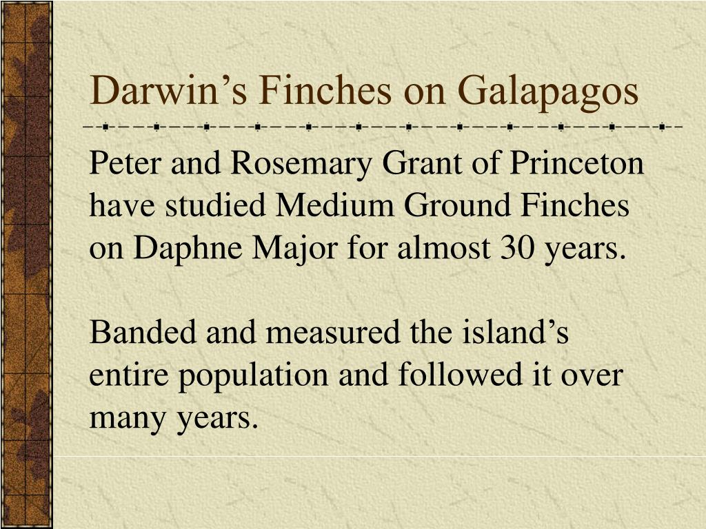 Darwin's Finches on Galapagos