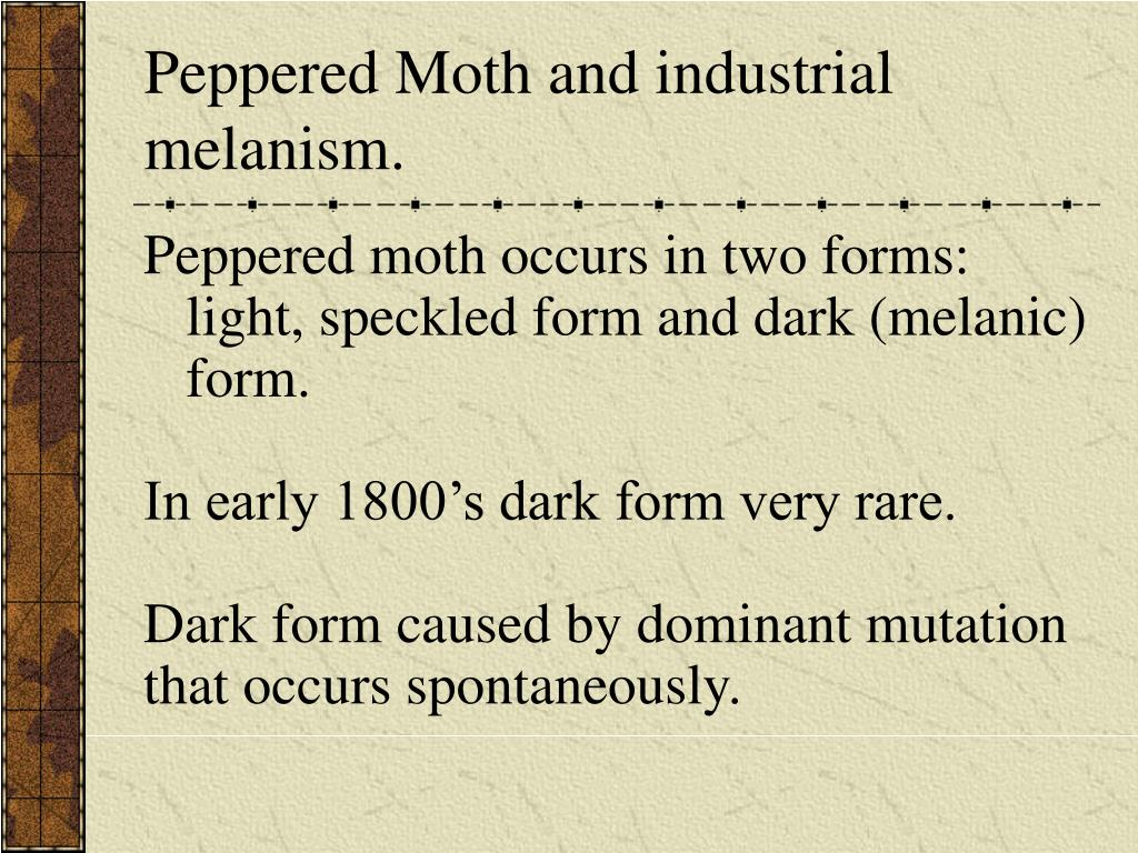 Peppered Moth and industrial melanism.
