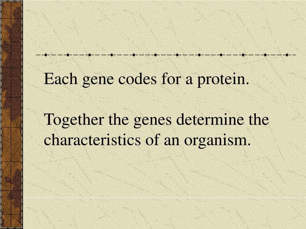 Each gene codes for a protein.
