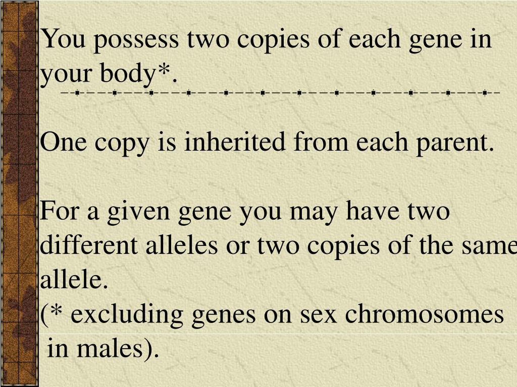 You possess two copies of each gene in