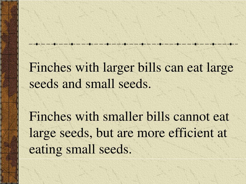 Finches with larger bills can eat large