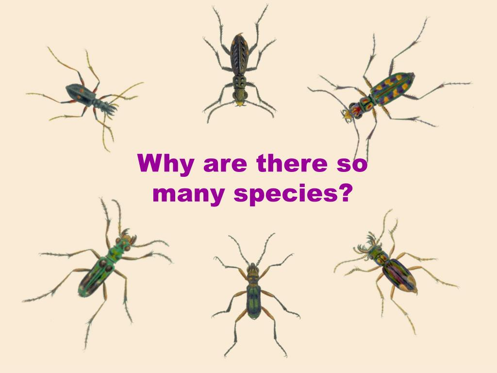Why are there so many species?