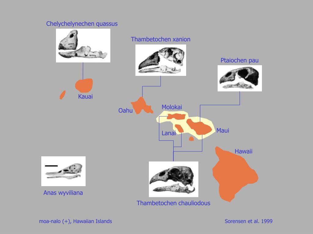 Chelychelynechen quassus